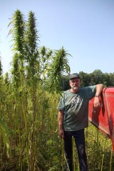 Jim Lynch, 6 foot, 8 inches tall, standing besides some 9 foot tall hemp stalks.