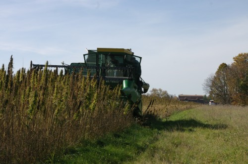Jim Lynch's John Deere 6600 combine begins harvesting where John's MF 35 left off.