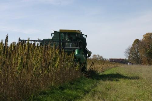 Jim Lynch's John Deere 6600 combine begins harvesting where John's MF 35 left off.