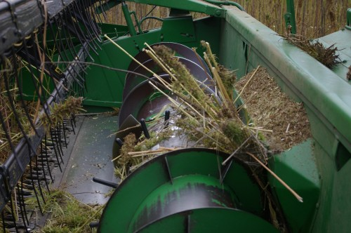 Very tall stalks couldn't be cut high enough, so the long stalk fibres got tangled between the auger and the mouth, bringing harvest to a temporary halt....